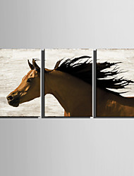 E-HOME® Stretched Canvas Art Fine Horse Decoration Painting  Set of 3