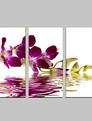 VISUAL STAR®Orchid Flower Stretched Canvas Prints Wall Decor Art Ready to Hang