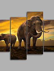 Stretched Canvas Print / Unframed Canvas Print Animal Realism Four Panels Elephant  Canvas  Print Wall  Art Decor For Home Decoration