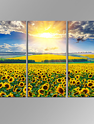 VISUAL STAR 3 Panel Sunflower  Planet Photos Print on Canvas Wall Decoration Canvas Art Ready to Hang