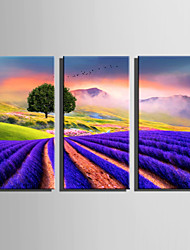 E-HOME Stretched Canvas Art Lavender Fields Decoration Painting Set Of 3