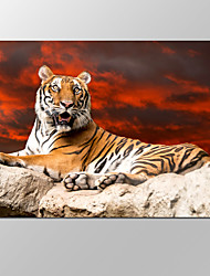 VISUAL STAR®Framed Canvas Art For Tiger in Sunset Pictures Print On Canvas For Home Modern Decoration