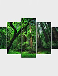 Stretched Canvas Print Landscape Floral/Botanical Modern Classic,Five Panels Canvas Any Shape Print Wall Decor For Home Decoration