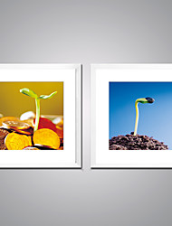 Framed Canvas Print The Sprouting Seed Picture Print on Canvas Contemporary Artwork for Wall Decor Ready to Hang
