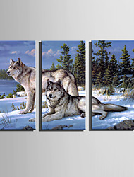 E-HOME Stretched Canvas Art Wolf In The Snow Decoration Painting Set Of 3