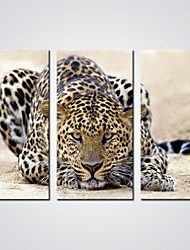 Canvas Prints A  Cheetah  Modern Canvas Art for Wall Decoration Ready to Hang