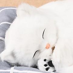 Diy ornamentos automotivos bonecos de carro criativo cães e cães simulação cão decoração decorativa pugs pendente de carro&Ornamentos