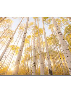 Stretched Canvas Art Landscape Colorado by Dan Ballard