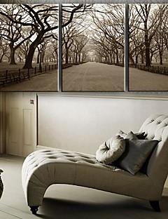 Su tela Art Landscape The Central Park Set di 3