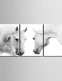 e-Home® Lærredstryk kunst driften hest dekoration maleri sæt af 3