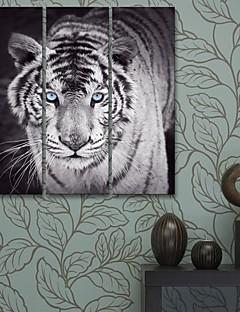 e-FOYER toile tendue art tigre peinture décorative ensemble de trois