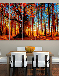 E-HOME® Stretched Canvas Art Red Wood  Decorative Painting  Set of 5