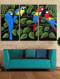 e-FOYER toile tendue art couleur perroquet peinture décoration ensemble de 3
