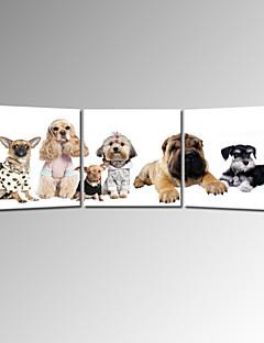 impression sur toile star®cute de Gog visuel pour enfant animaux art mural prêt à accrocher
