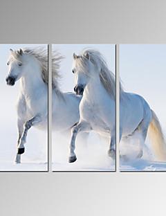 Animal / Loisir / Photographie / Moderne / Romantique / Pop Art / Voyage Toile Trois Panneaux Prêt à accrocher , Format Vertical