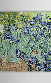 Famous Oil Painting Irises by Van Gogh