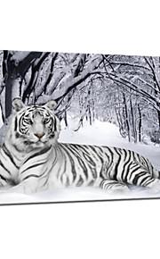 시각 star®tiger 동물 캔버스 페인팅 아트의 겨울 눈 뻗어 캔버스 인쇄