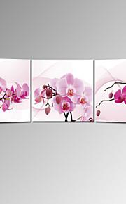 VISUAL STAR®Stretched Canvas Print Three Panels Wall Art Ready to Hang