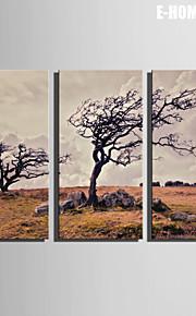 E-Home® Leinwand Kunst verdorrte Baum Dekoration Malerei Set von 3
