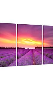 visuell star®lavender blomsterhage triptykon lerret utskrift solnedgang natur veggen kunst klar til å henge
