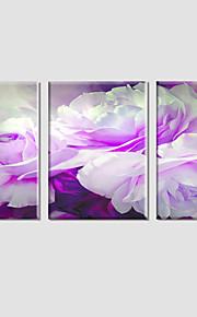 Botanisk / Moderne / Pop Art Lerret Print Tre Paneler Klar til å henge , Vannrett