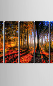 E-HOME® Stretched Canvas Art Forest Landscape Decoration Painting  Set Of 5