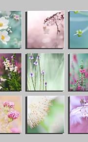 Botanisch Canvas Afdrukken Eén paneel Klaar te hangen,Vierkant