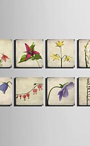 Botanisch Leinwand drucken Ein Panel Fertig zum Aufhängen,Quadratisch