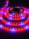 36W Lampes Horticoles LED 300 SMD 5050 lm Rouge / Bleu Etanches DC 12 V 1 piece