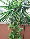 1 Gren Polyester Plast Plantor Annat korg med blommor Konstgjorda blommor 26.771\'\')68